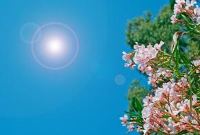 Terça-feira (04) será de tempo bom e sol durante todo o dia, em Xanxerê