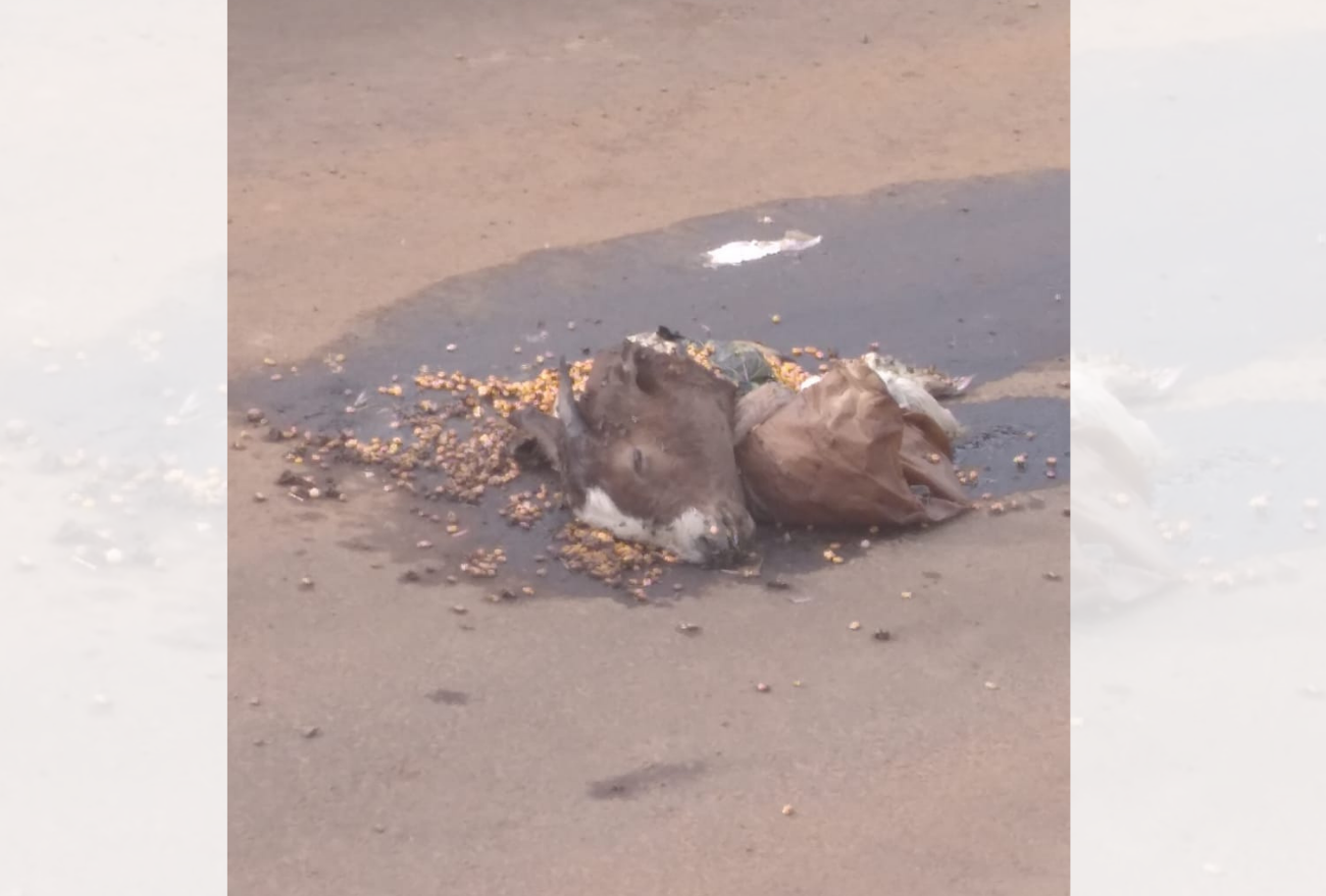 Animais são mortos para possível ritual de magia negra, em Xanxerê