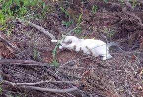 Moradora de Faxinal dos Guedes relata abandono de animais
