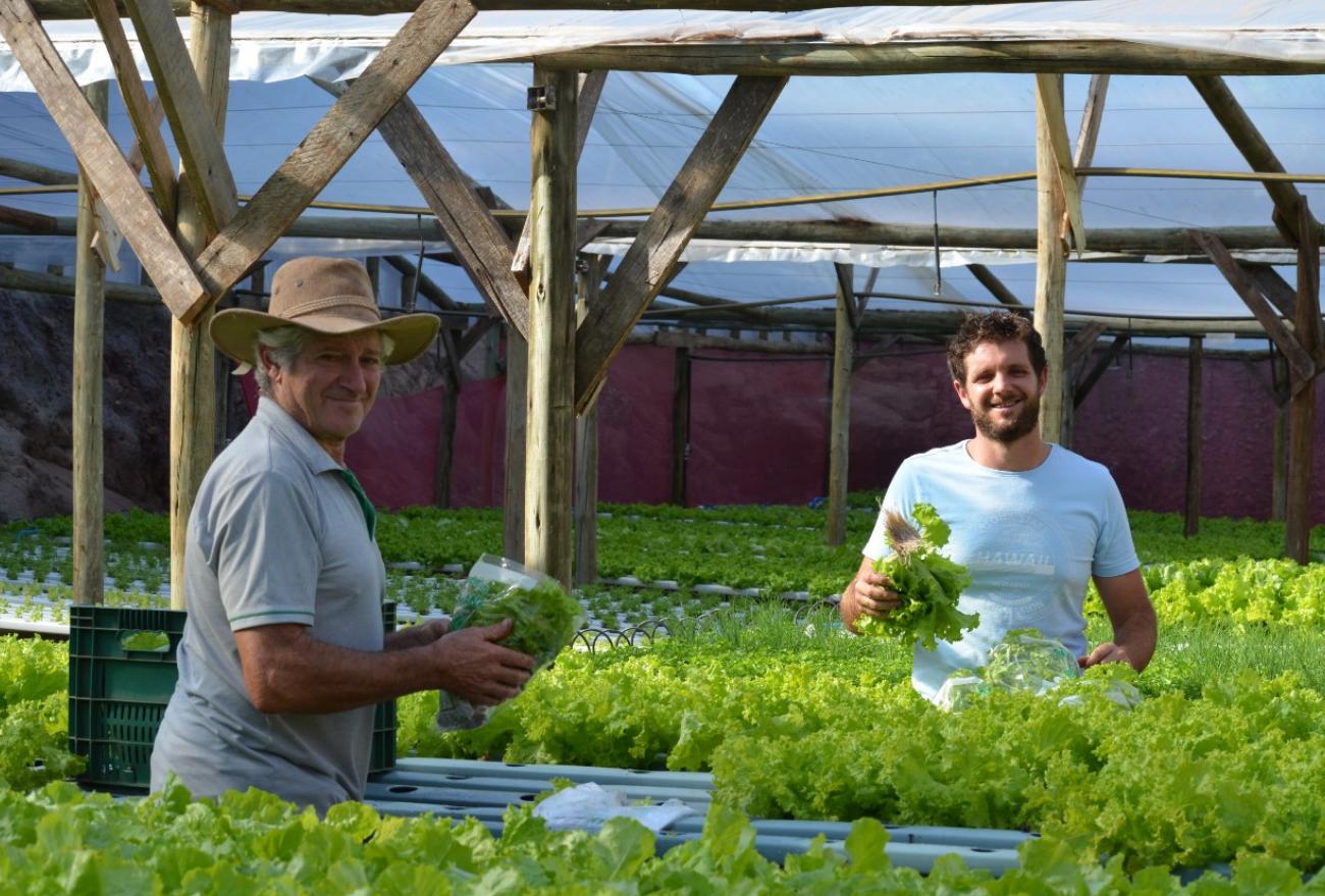 Lance no Campo: jovem investe na plantação de verduras hidropônicas, em Faxinal dos Guedes