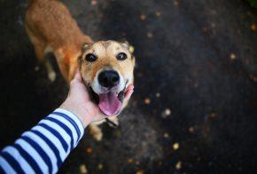 Sorteio da rifa em prol dos animais de rua será realizada na próxima sexta-feira