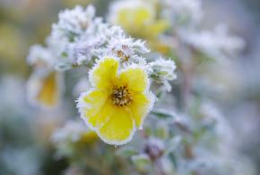 Fim de semana deve ser gelado e com previsão de geada em todas as regiões