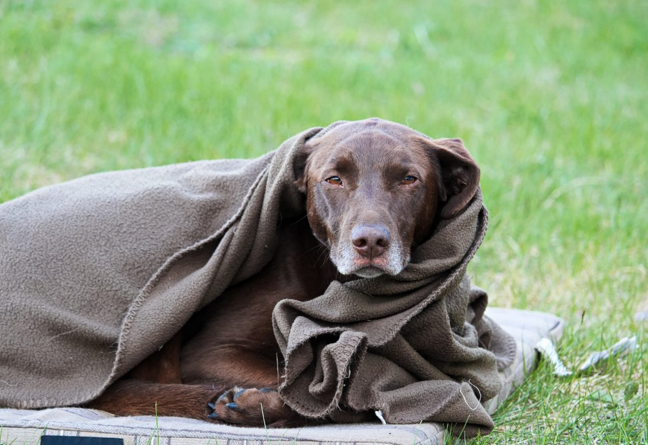 Confira algumas dicas para ajudar os animais em situação de rua no período de inverno