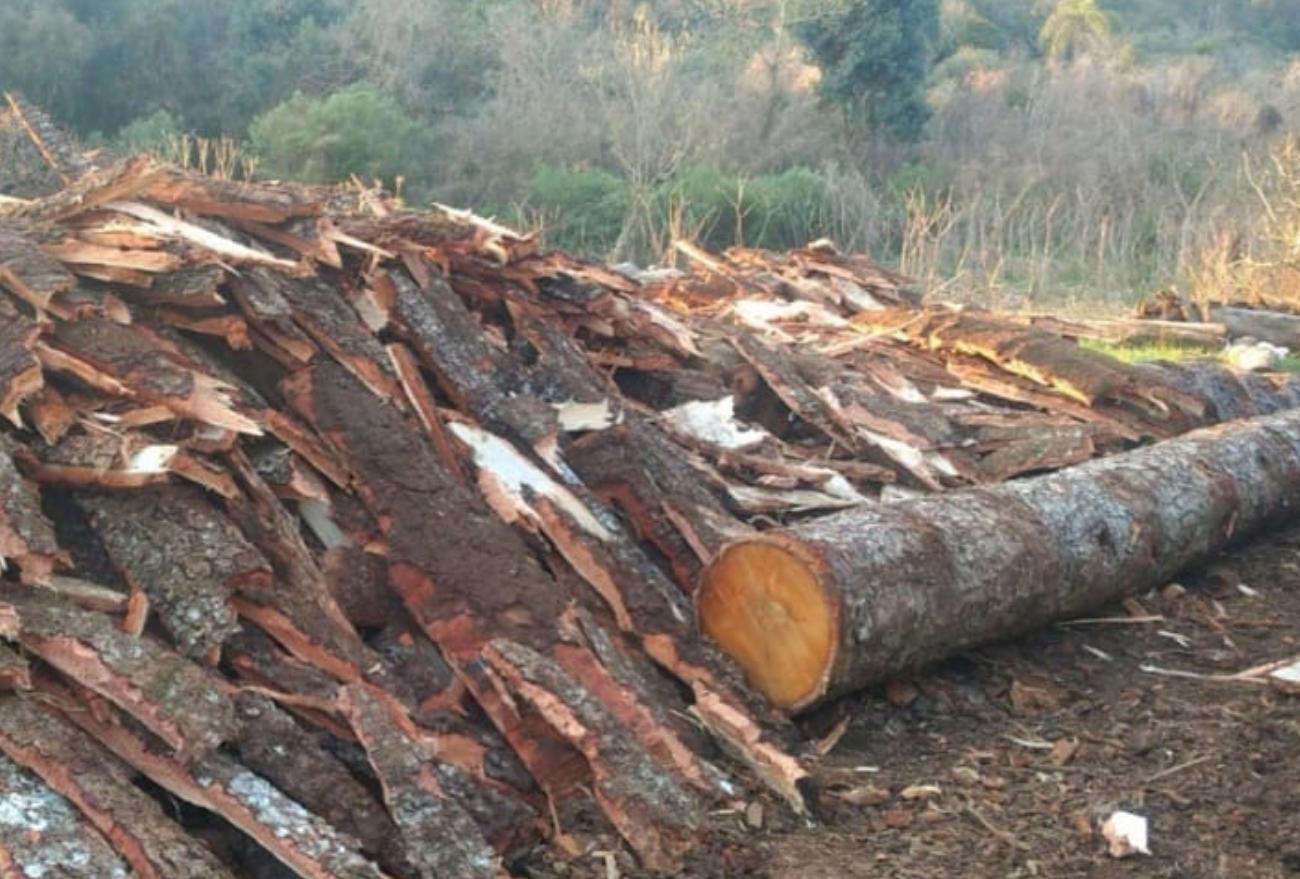 Polícia Militar Ambiental suspende funcionamento de madeireira, em Abelardo Luz