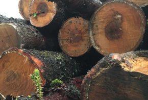 Polícia Militar Ambiental apreende carga de madeira nativa